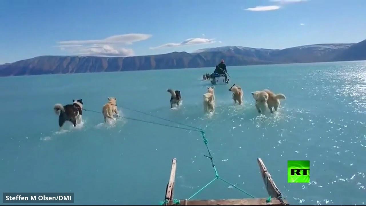 كلاب تسير على المياه