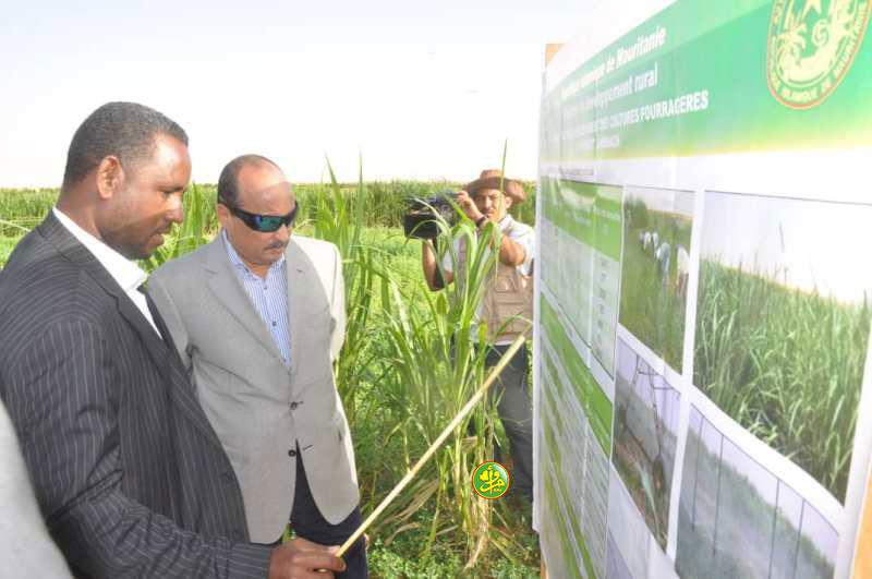 """الرئيس يتجول في """"مزرعة الأعلاف الخضراء"""" في انبيكت (صورة)"""