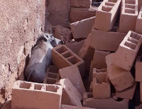 عر في منزل مهجور بالمذرذرة (الصورة من صفحة البراء محمد)